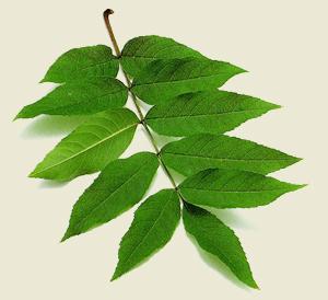 hojas de arboles es: